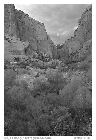 South Fork of Kolob Canyons at sunset. Zion National Park (black and white)