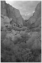 South Fork of Kolob Canyons at sunset. Zion National Park, Utah, USA. (black and white)