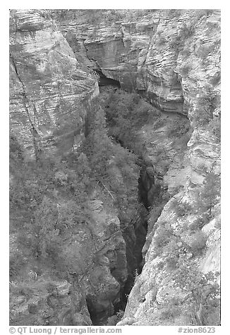 Slot Canyon seen from above. Zion National Park (black and white)