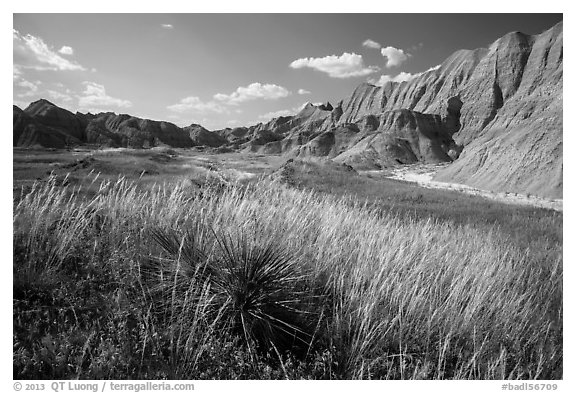 Grasses and badlands in Conata Basin. Badlands National Park (black and white)