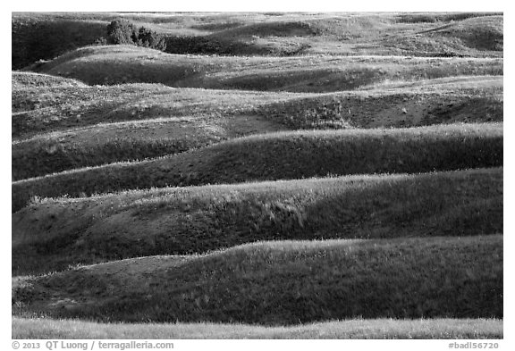Grassy ridges, Badlands Wilderness. Badlands National Park (black and white)