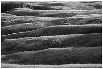 Grassy ridges, Badlands Wilderness. Badlands National Park, South Dakota, USA. (black and white)