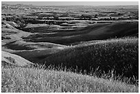 Grassy hills in early summer, Badlands Wilderness. Badlands National Park, South Dakota, USA. (black and white)