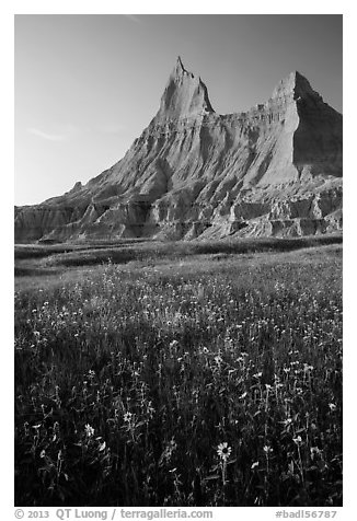 Sunflowers and pointed pinnacles at sunset. Badlands National Park (black and white)