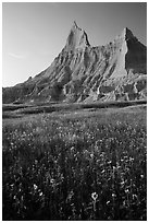 Sunflowers and pointed pinnacles at sunset. Badlands National Park, South Dakota, USA. (black and white)