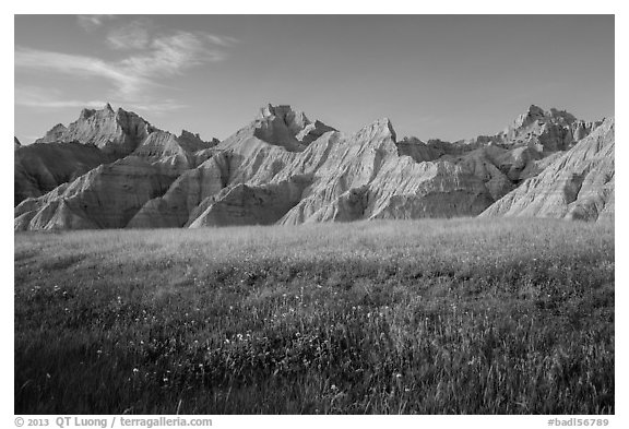 Grasses with summer flowers and buttes at sunset. Badlands National Park (black and white)