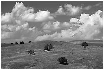 Rolling hills, junipers, afternoon clouds. Badlands National Park, South Dakota, USA. (black and white)