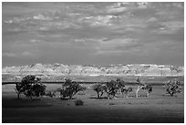 Cottonwoods and badlands, Stronghold Unit. Badlands National Park, South Dakota, USA. (black and white)