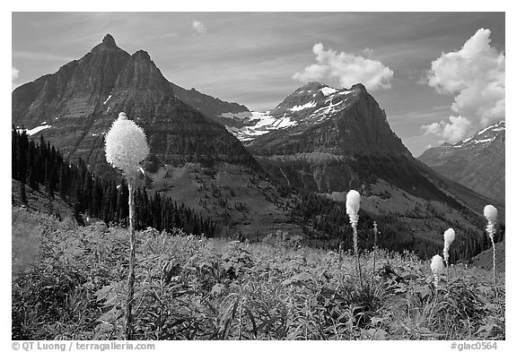 Beargrass, Mt Oberlin and Cannon Mountain. Glacier National Park, Montana, USA.