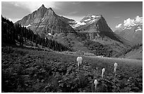 Bear grass, Mt Oberlin and Cannon Mountain. Glacier National Park, Montana, USA. (black and white)