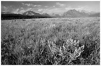 Prairie and Lewis range. Glacier National Park ( black and white)