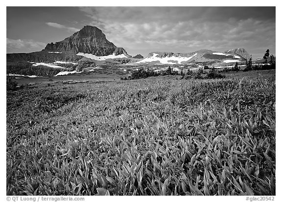 Alpine meadow with wildflowers and triangular peak, Logan Pass. Glacier National Park (black and white)