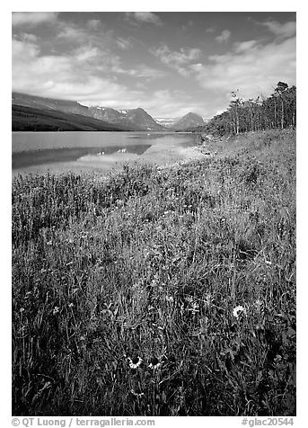 Wildflowers and Sherburne Lake, morning. Glacier National Park (black and white)