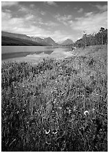 Wildflowers and Sherburne Lake, morning. Glacier National Park ( black and white)
