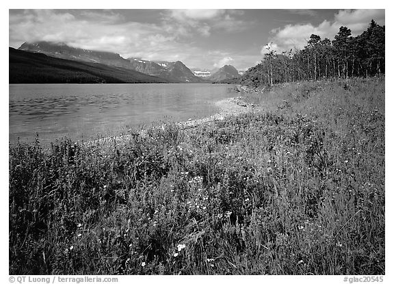 Wildflowers on shore of Sherburne Lake. Glacier National Park (black and white)