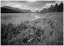 Wildflowers on shore of Sherburne Lake. Glacier National Park ( black and white)