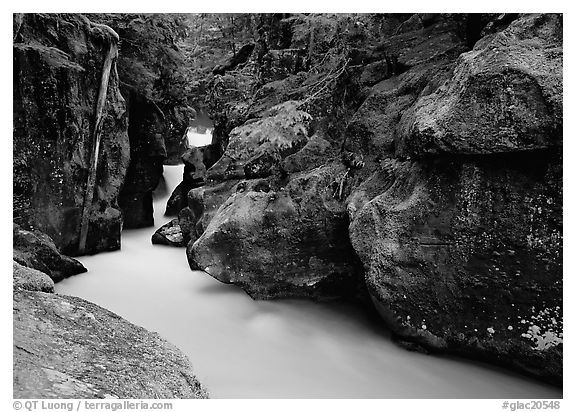 Avalanche creek. Glacier National Park (black and white)