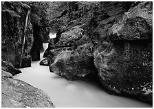 Mossy gorge, Avalanche creek. Glacier National Park ( black and white)