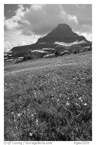 Meadow with wildflower carpet and triangular mountain, Logan pass. Glacier National Park (black and white)