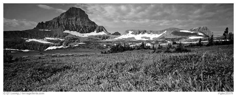 Alpine landscape with wildflower meadows and peak. Glacier National Park (black and white)