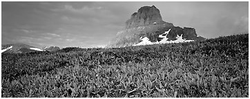 Alpine scenery with triangular peak rising above meadows. Glacier National Park (Panoramic black and white)