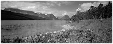 Mountain lake with wildflowers on shore. Glacier National Park (Panoramic black and white)