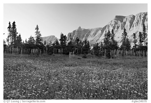 Meadow with wildflowers and Garden Wall at sunset. Glacier National Park (black and white)