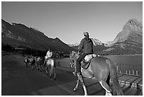 Horses on the shores of Swiftcurrent Lake, sunrise. Glacier National Park ( black and white)