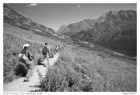 Group hiking on the Grinnell Glacier trail. Glacier National Park (black and white)