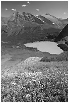 Wildflowers high above Grinnel Lake, with Allen Mountain in the background. Glacier National Park, Montana, USA. (black and white)