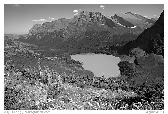 Alpine wildflowers, Grinnell Lake, and Allen Mountain. Glacier National Park (black and white)