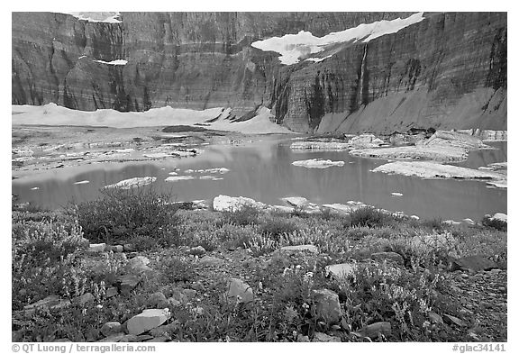 Wildflowers, Upper Grinnell Lake, Salamander Falls and Glacier. Glacier National Park (black and white)