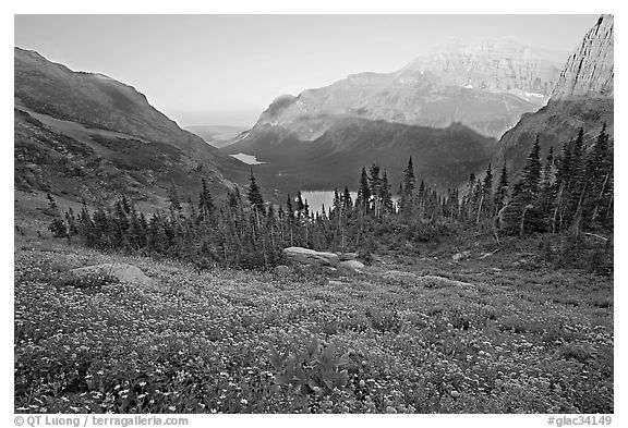 Wildflower meadow and Many Glacier Valley, late afternoon. Glacier National Park (black and white)