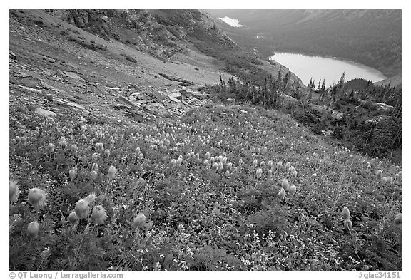 Bear Grass, Grinnell Lake and Josephine Lake. Glacier National Park (black and white)
