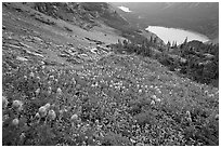 Bear Grass, Grinnell Lake and Josephine Lake. Glacier National Park ( black and white)
