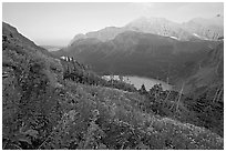 Alpine wildflowers, Grinnell Lake, and Allen Mountain, sunset. Glacier National Park ( black and white)