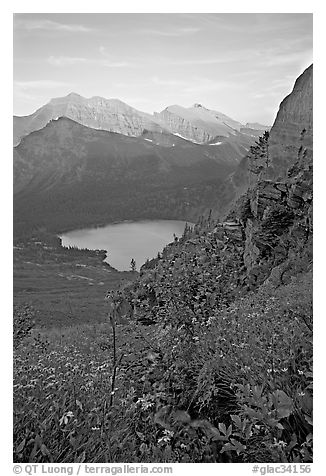 Alpine wildflowers and stream, Grinnell Lake, and Allen Mountain, sunset. Glacier National Park (black and white)