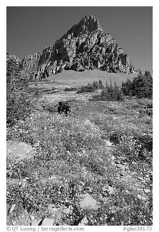 Meadow with wildflowers below Clemens Mountain, Logan Pass. Glacier National Park (black and white)