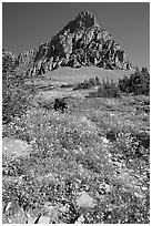 Meadow with wildflowers below Clemens Mountain, Logan Pass. Glacier National Park, Montana, USA. (black and white)