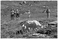 Visitors watching mountains goats near Logan Pass. Glacier National Park, Montana, USA. (black and white)