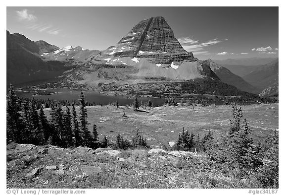 Meadows with alpine wildflowers, Hidden Lake and Bearhat Mountain behind. Glacier National Park (black and white)