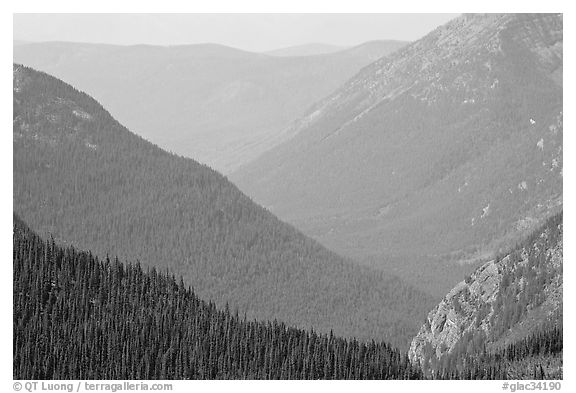 Forested Ridges seen from Hidden Lake Pass. Glacier National Park (black and white)
