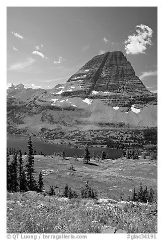 Alpine Meadows with wildflowers, Hidden Lake and Bearhat Mountain behind. Glacier National Park (black and white)