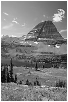 Alpine Meadows with wildflowers, Hidden Lake and Bearhat Mountain behind. Glacier National Park ( black and white)