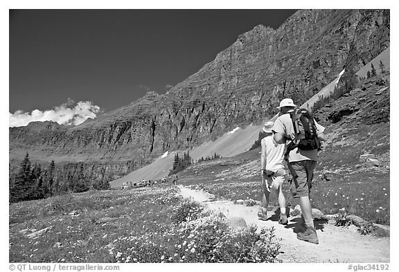 Hikers on trail amongst wildflowers near Hidden Lake. Glacier National Park (black and white)