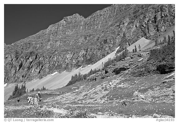 Family hiking on trail amongst wildflowers near Hidden Lake. Glacier National Park (black and white)