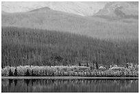 Hills with burned forest above lakeshore with autumn foliage, Saint Mary Lake. Glacier National Park ( black and white)