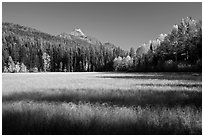 Shadows in autumn meadow. Glacier National Park ( black and white)