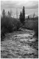 Bowman Creek. Glacier National Park ( black and white)