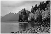 Trees in autumn color and Lake McDonald. Glacier National Park ( black and white)
